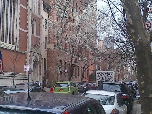 Manhattan-20140418-Wendler_Callery pear