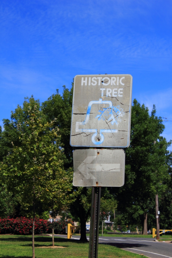 Hunting Park historic tree sign, photograph by Nick Tenaglia, 25th of August 2013